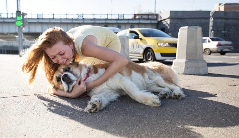 Perte d'un animal de compagnie : comment s'en remettre ?